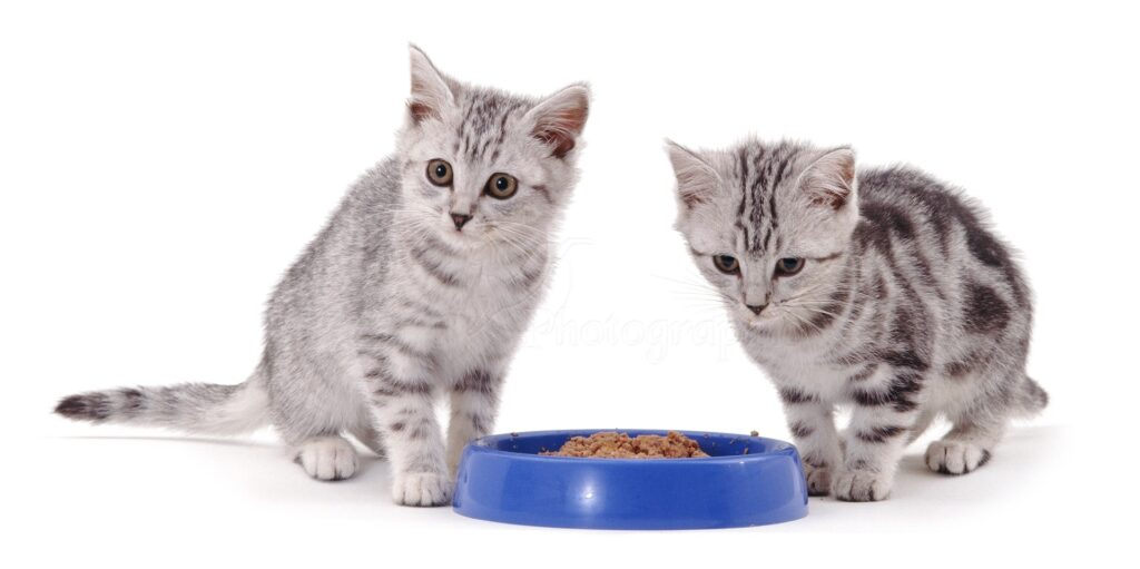 feed-canned-food