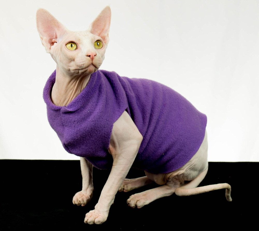 Hairless-Cat-Clothing